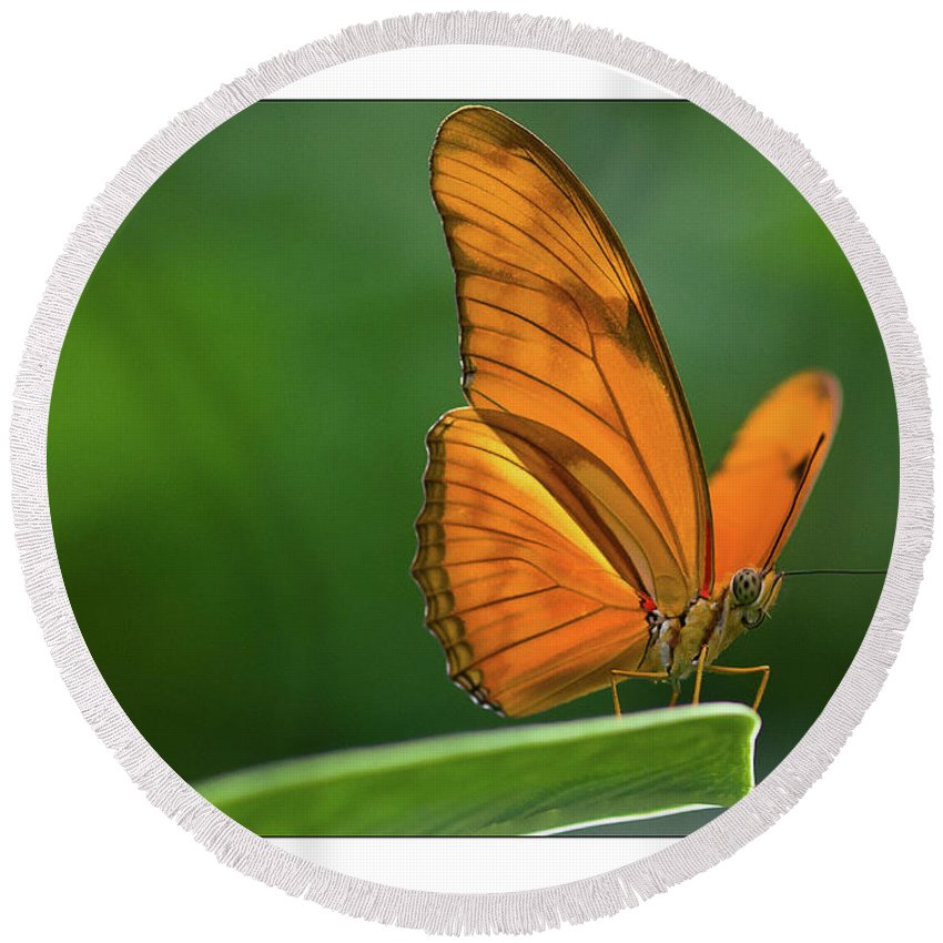 Round Beach Towel featuring the photograph Butterfly by Jan De Graaf