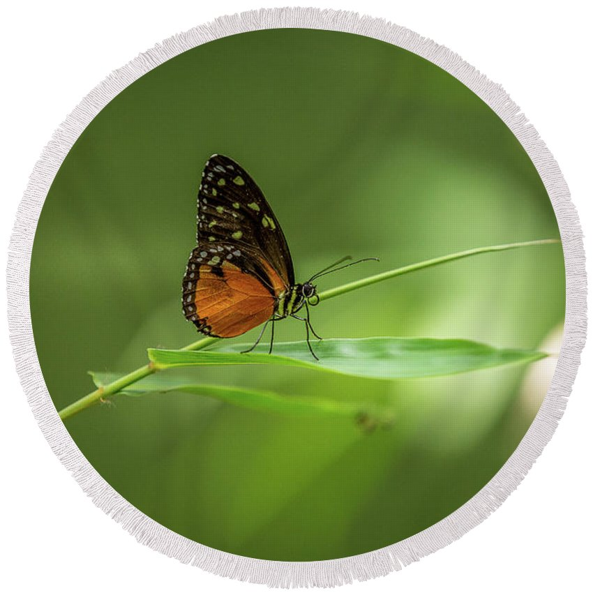 Butterfly Round Beach Towel featuring the photograph Golden Helicon Butterfly by Jimmy Tran