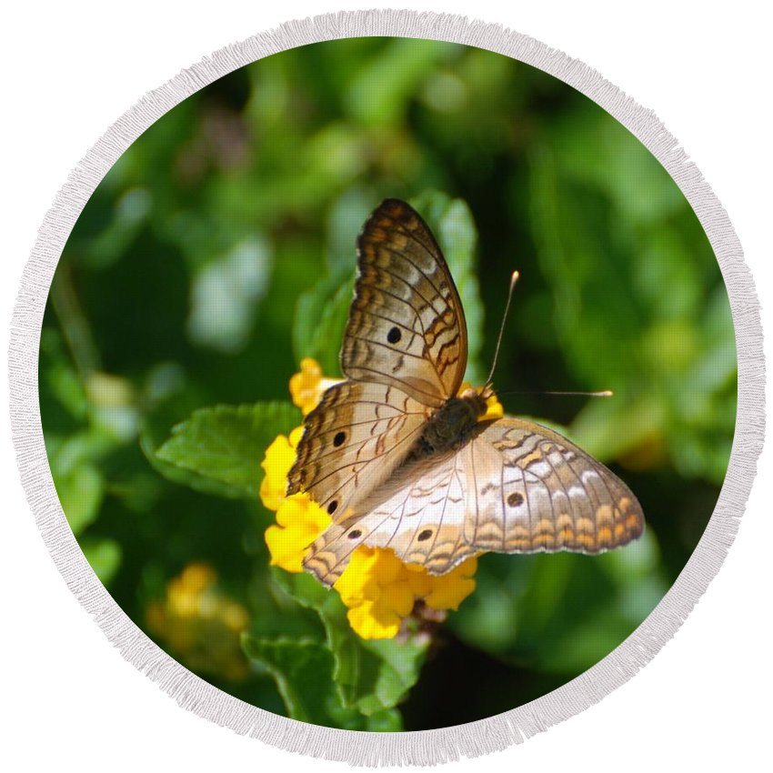 Butterfly Round Beach Towel featuring the photograph Butterfly Land by Rob Hans