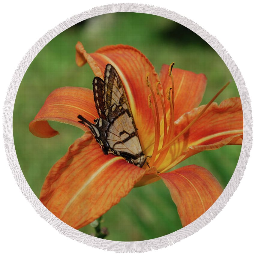 Lily Round Beach Towel featuring the photograph Butterfly On A Blooming Orange Daylily Flower Blossom by DejaVu Designs