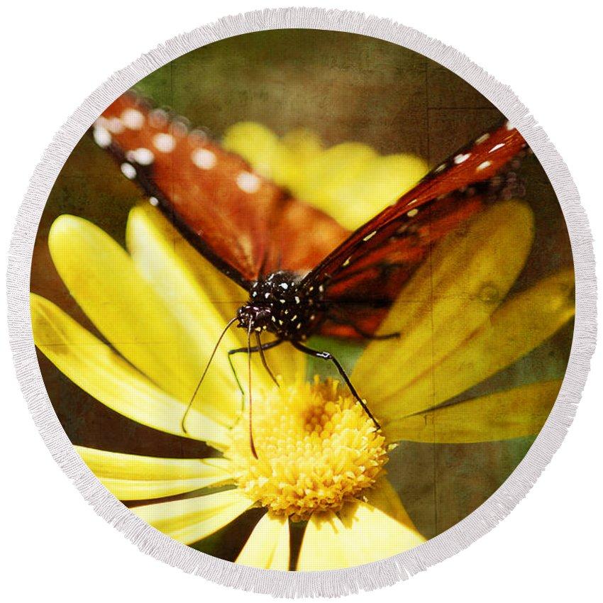 Butterfly Round Beach Towel featuring the photograph Butterfly On A Daisy by Saija Lehtonen
