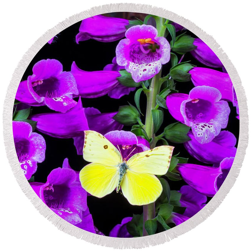 Purple Foxglove Round Beach Towel featuring the photograph Butterfly On Foxglove by Garry Gay