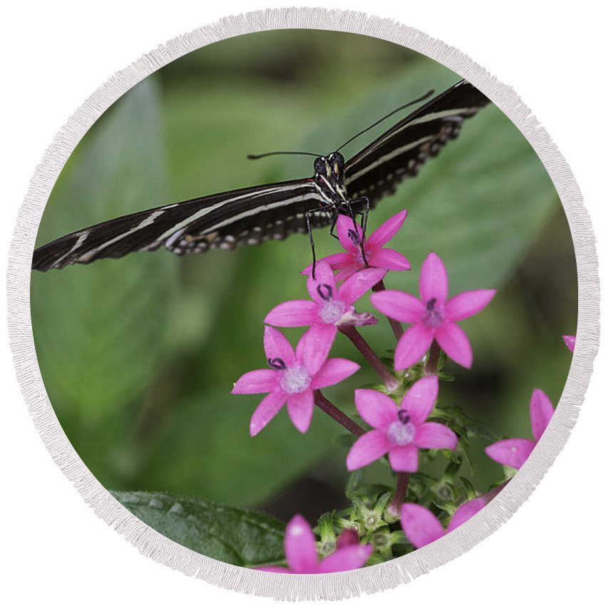 Butterfly Round Beach Towel featuring the photograph Butterfly On Pink Flowers by Billy Bateman