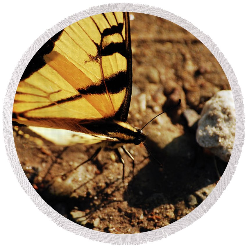 Butterfly Round Beach Towel featuring the photograph Butterfly On The Rocks by Lori Tambakis