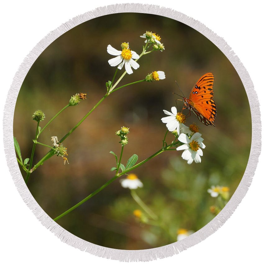 Butterfly Round Beach Towel featuring the photograph Butterfly On Widflower by Sandy Keeton