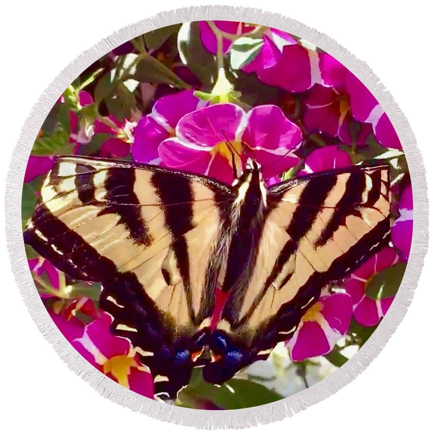 Swallowtail Butterfly Rests For A Moment Among The Fustia Pink Flowers. Insects Round Beach Towel featuring the photograph Swallowtail Butterfly Pink by Susan Garren