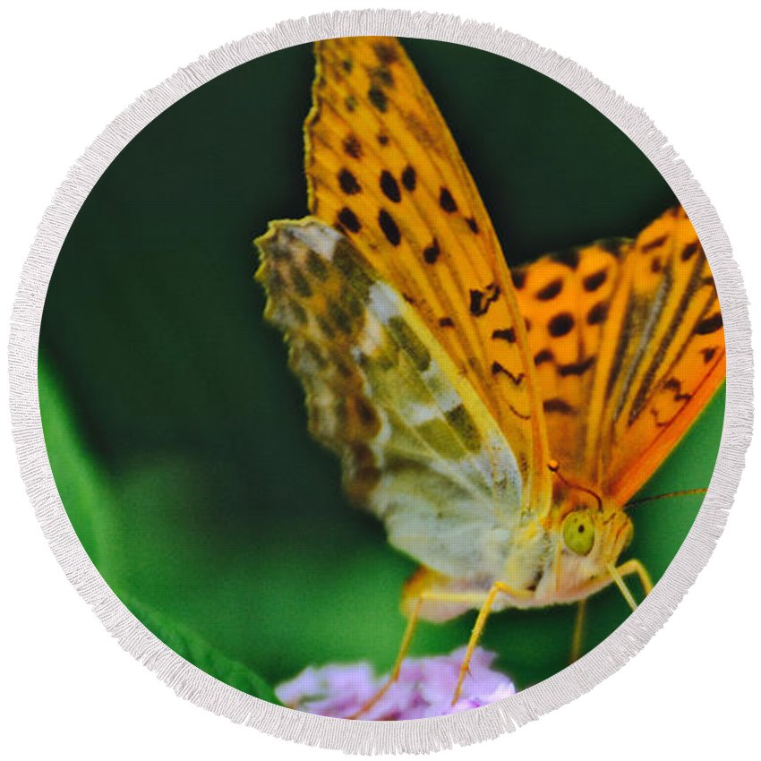 Butterfly Round Beach Towel featuring the photograph Butterfly Pose by Photos By Zulma
