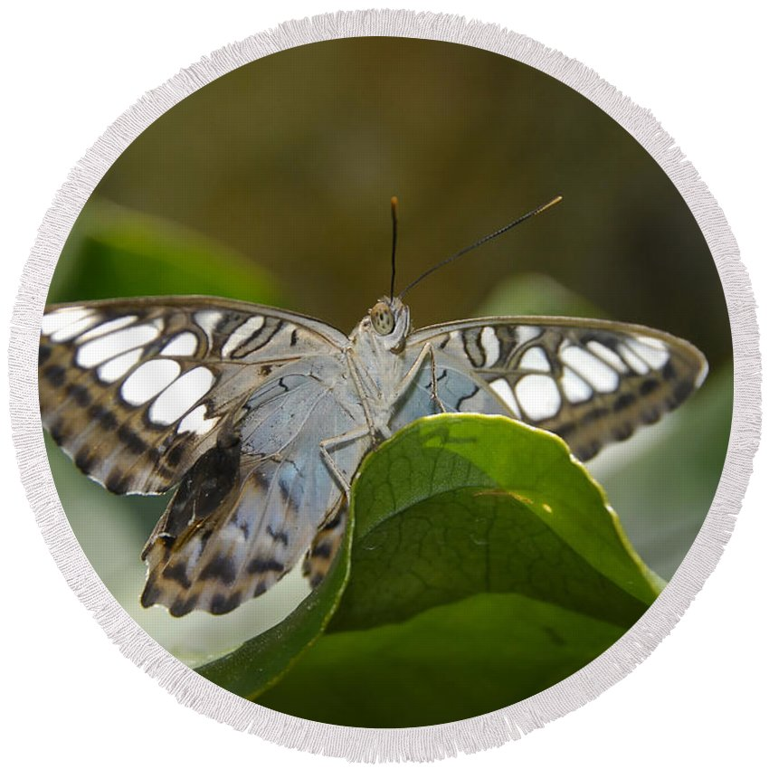 Pretty Round Beach Towel featuring the photograph Butterfly Watching by David Lee Thompson