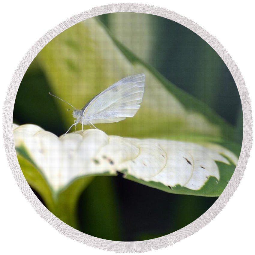 Gardening Round Beach Towel featuring the photograph Cabbage Butterfly by Debra Bender