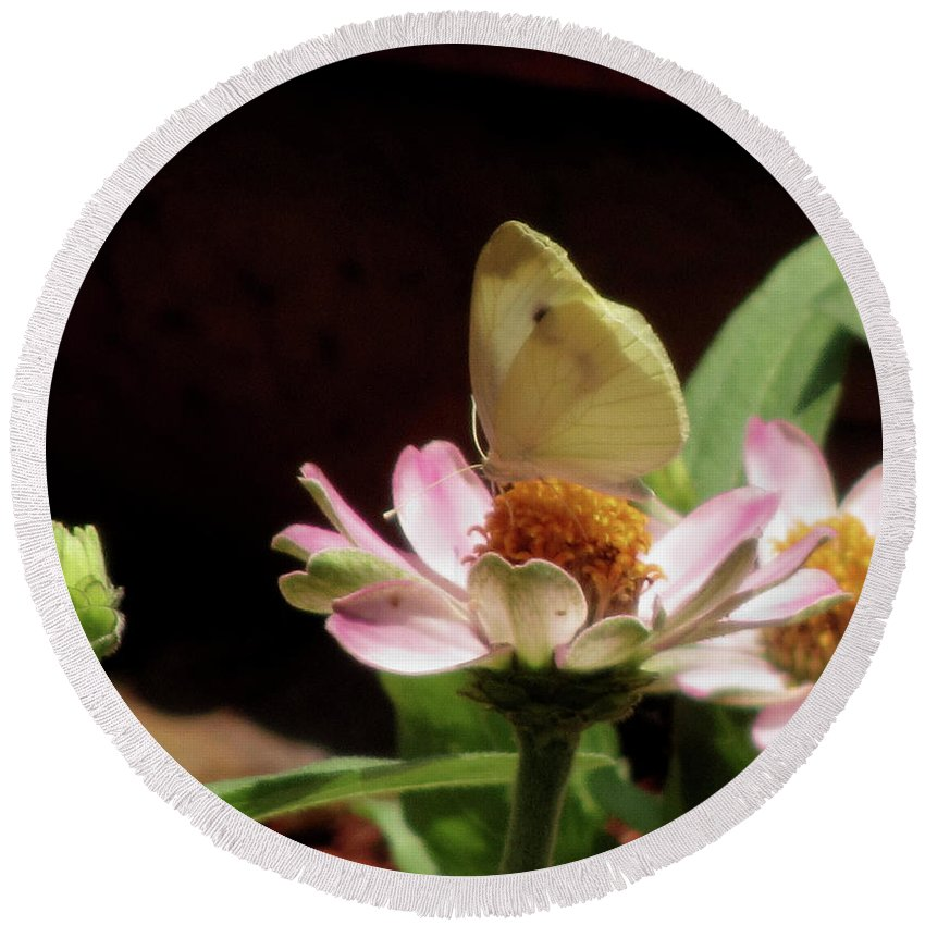 Insect Round Beach Towel featuring the photograph Cabbage White Butterfly by Donna Brown