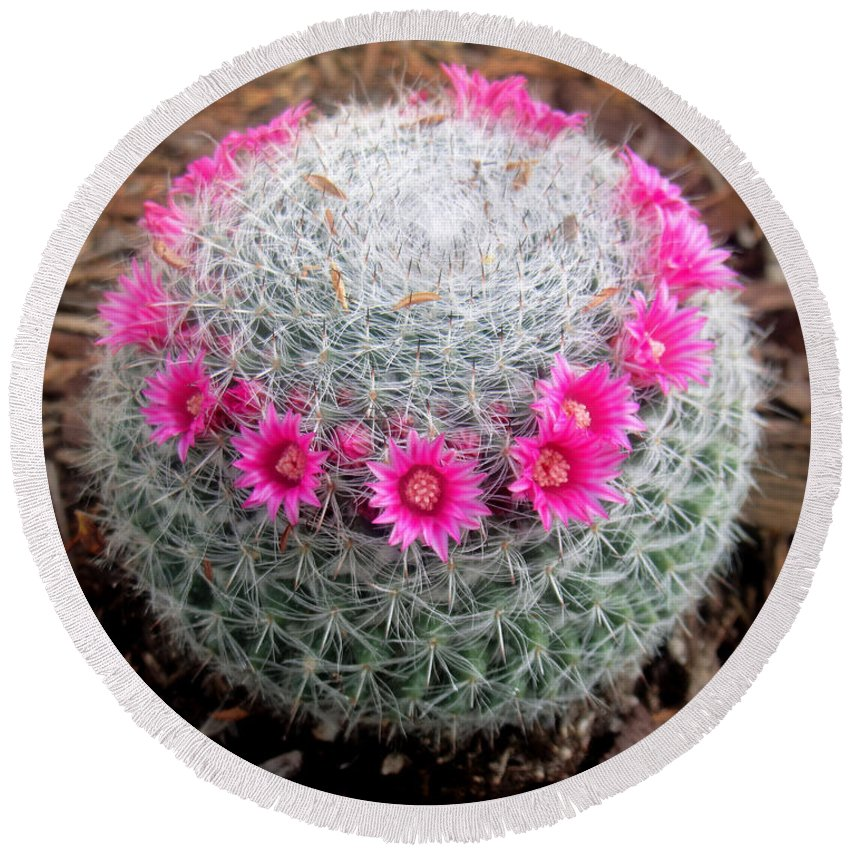 Cactus Ball With Pink Flowers Round Beach Towel For Sale By Sofia