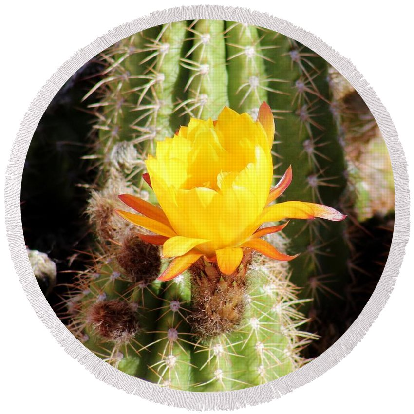 Flower Round Beach Towel featuring the photograph Cactus Bloom 033114a by Edward Dobosh