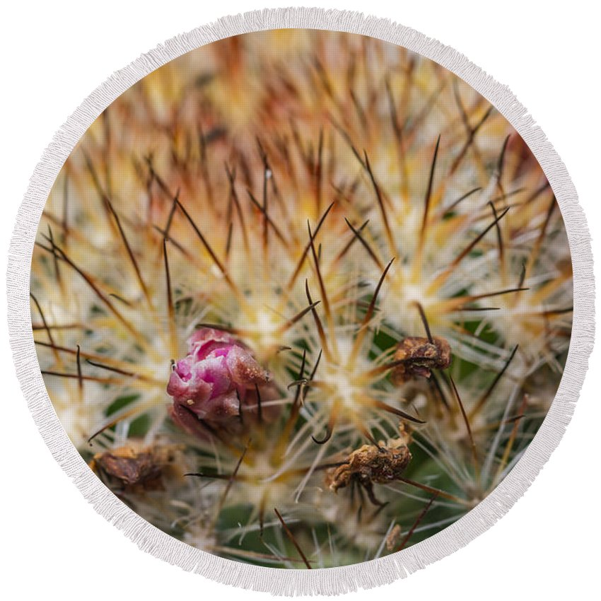 Colorado Round Beach Towel featuring the photograph Cactus Bud by Ashley M Conger