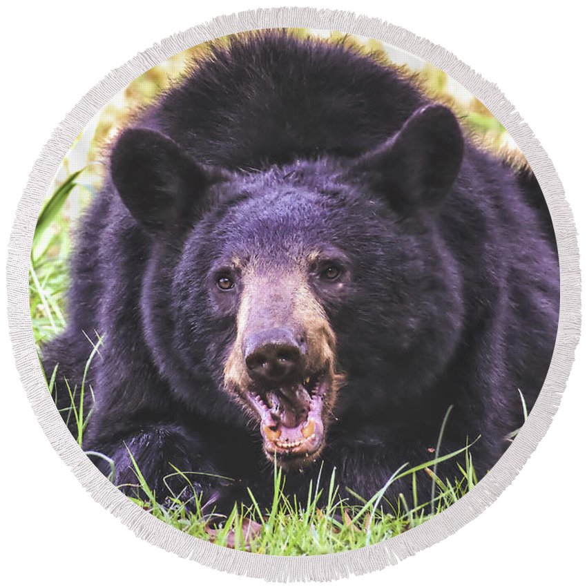 Cade's Cove Bear Round Beach Towel featuring the photograph Cades Cove Black Bear by Mel Hensley