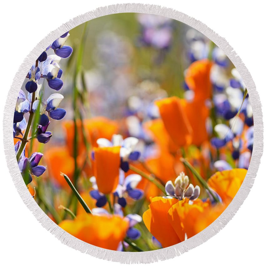 California Round Beach Towel featuring the photograph California Poppies And Lupine by Kyle Hanson