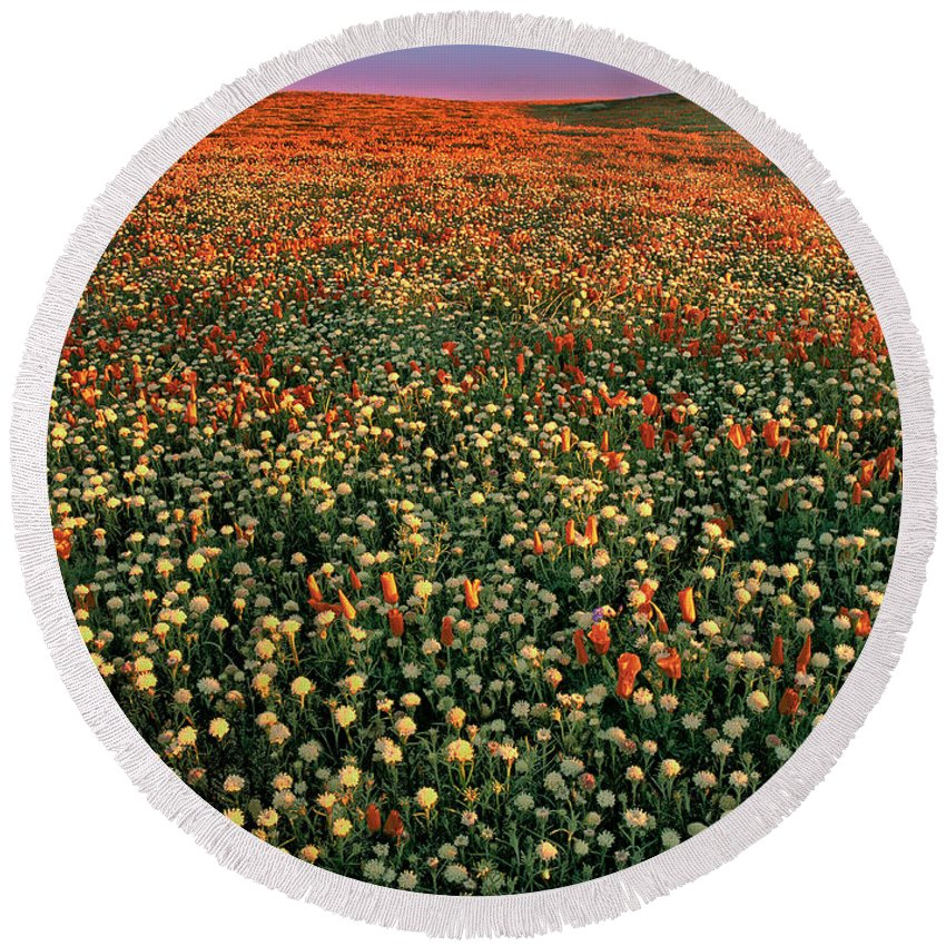 California Poppies Round Beach Towel featuring the photograph California Poppies At Dawn Lancaster California by Dave Welling
