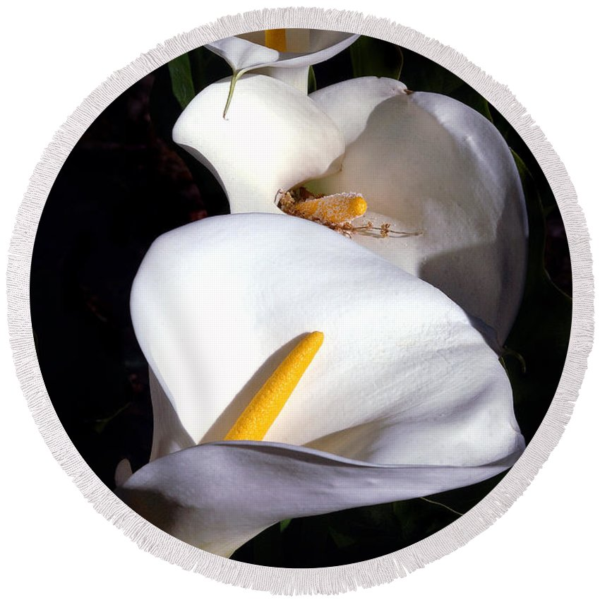 Nature Round Beach Towel featuring the photograph Calla Trio by Norman Andrus
