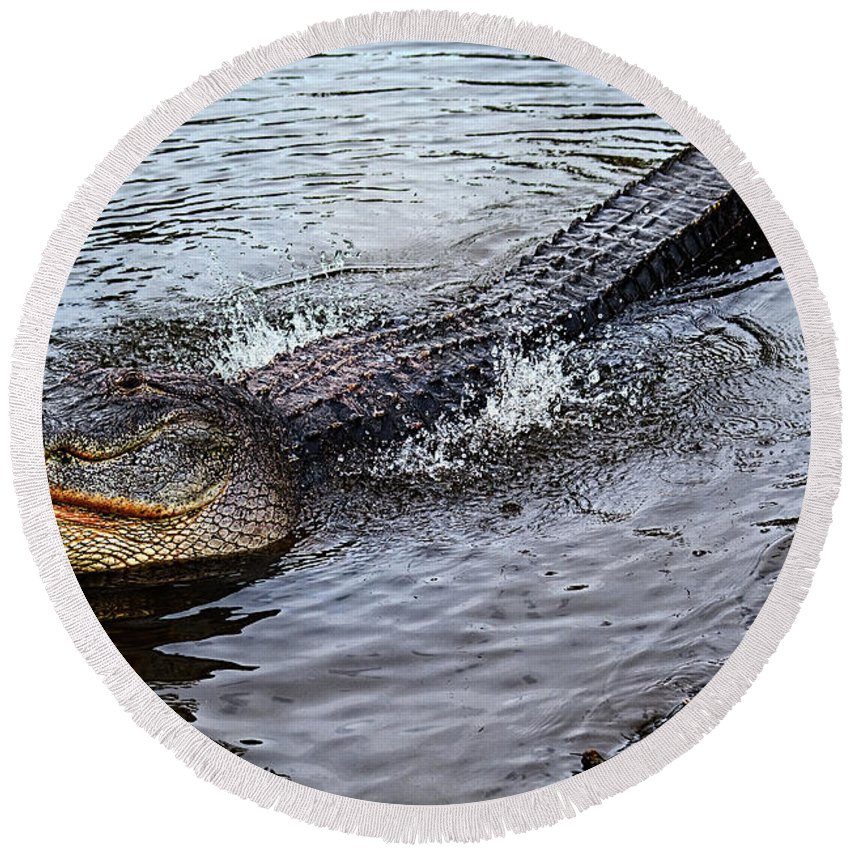 Alligator Round Beach Towel featuring the photograph Calling For A Date by Christopher Holmes