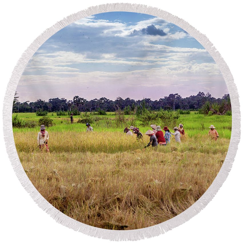 Cambodia Round Beach Towel featuring the photograph Cambodia Field Workers Harvesting Rice by Art Phaneuf