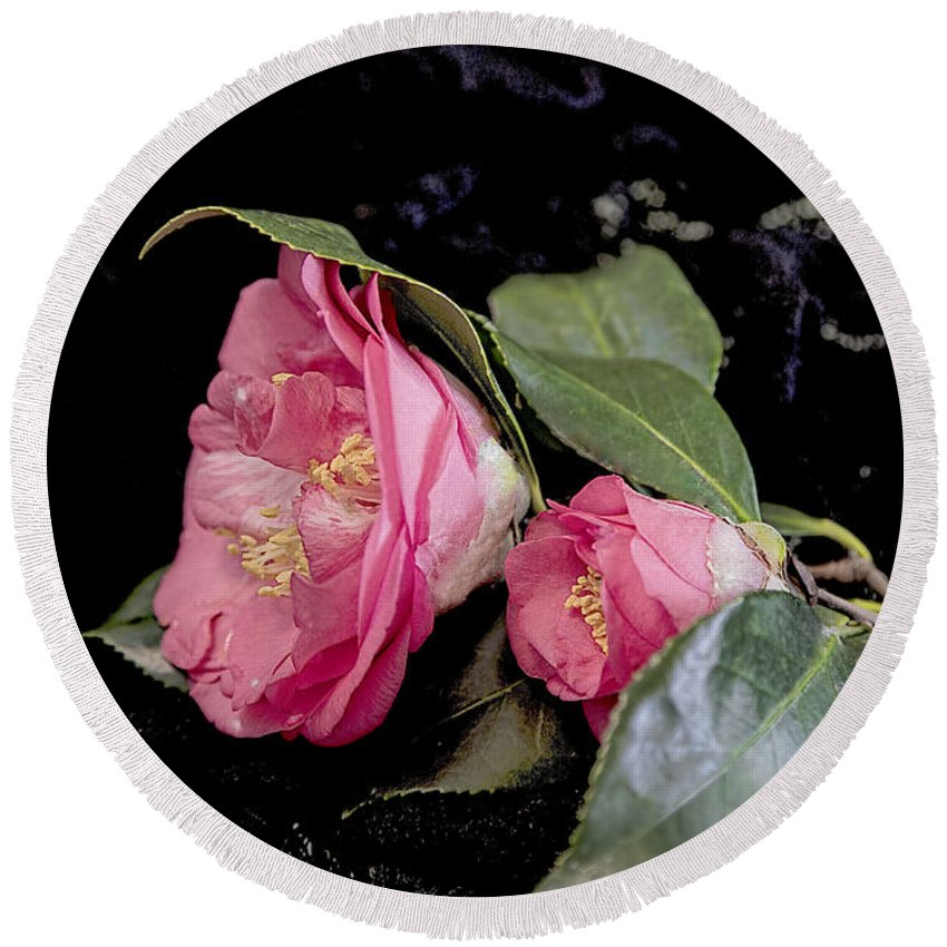 Camellia Round Beach Towel featuring the photograph Camellia Still Life by Kay Brewer