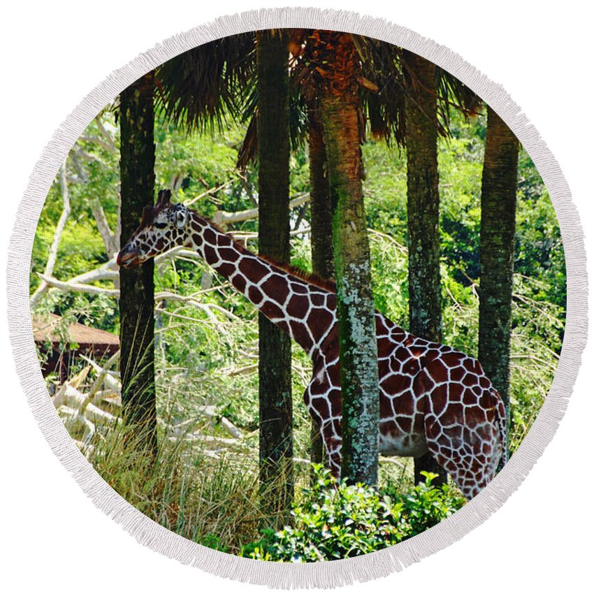 Giraffe Round Beach Towel featuring the photograph Camouflage Coat by Debbie Oppermann