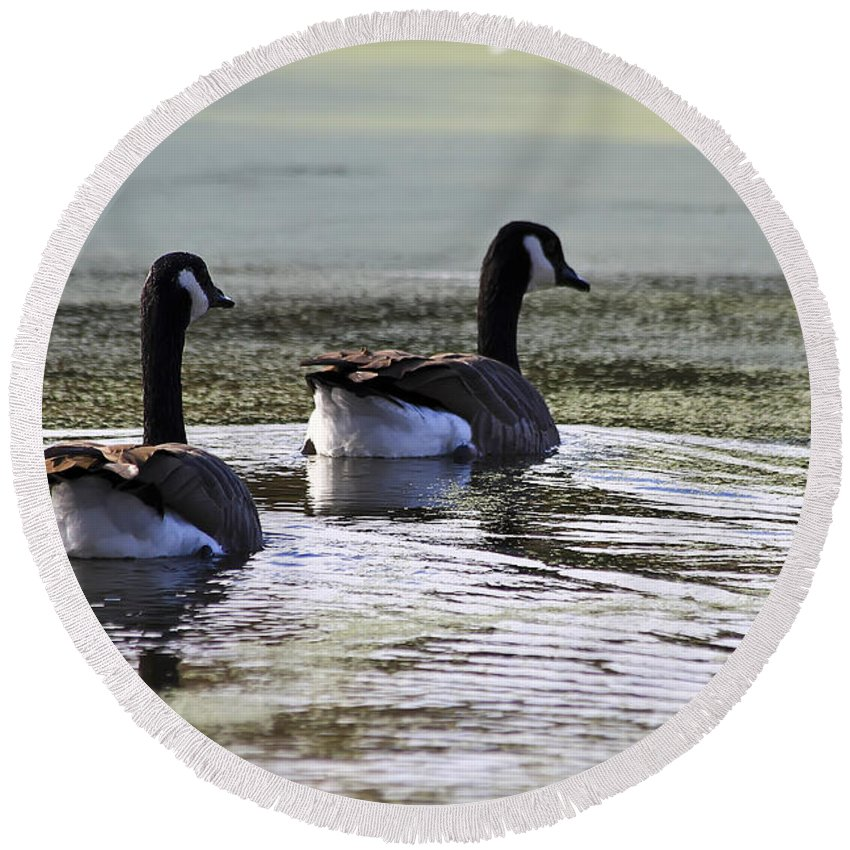 Animal Round Beach Towel featuring the photograph Canada Geese by Teresa Zieba