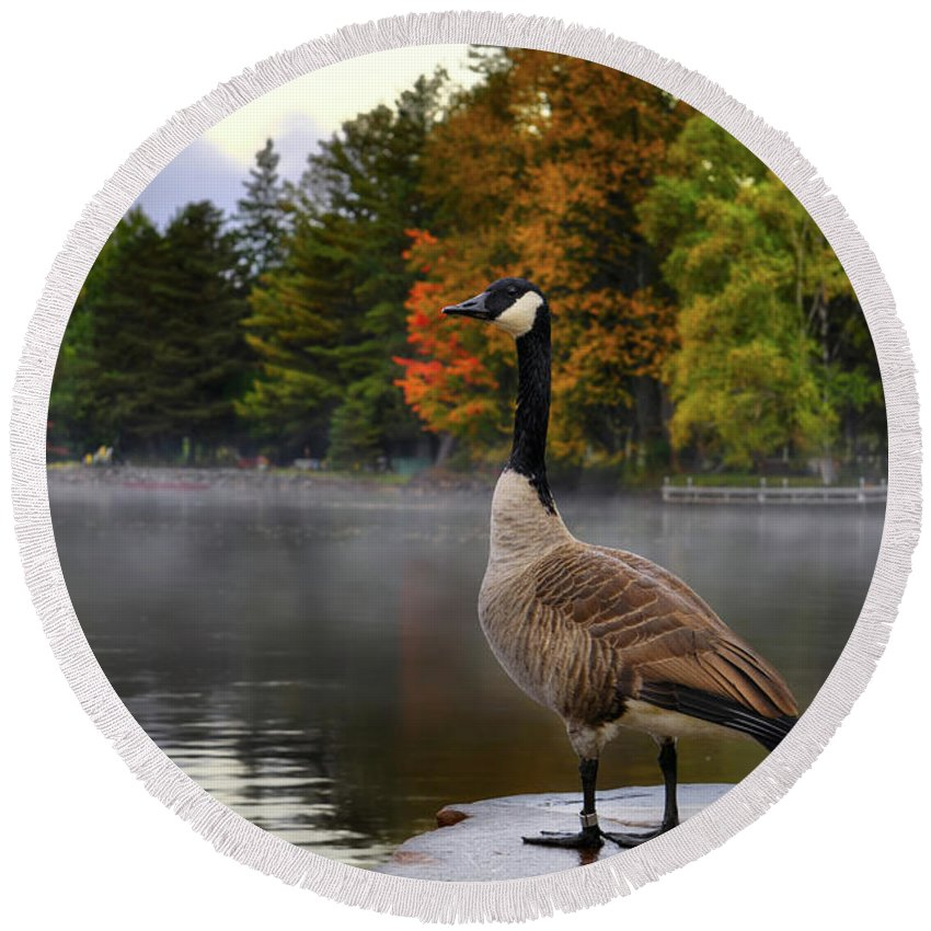 Canada Goose Round Beach Towel featuring the photograph Canada Goose by Maxim Images Prints