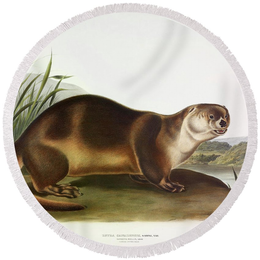 Northern River Otter Round Beach Towels
