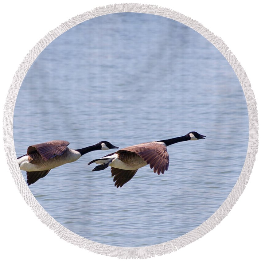 Canadian Geese Round Beach Towel featuring the photograph Canadian Geese In Flight by SR Green