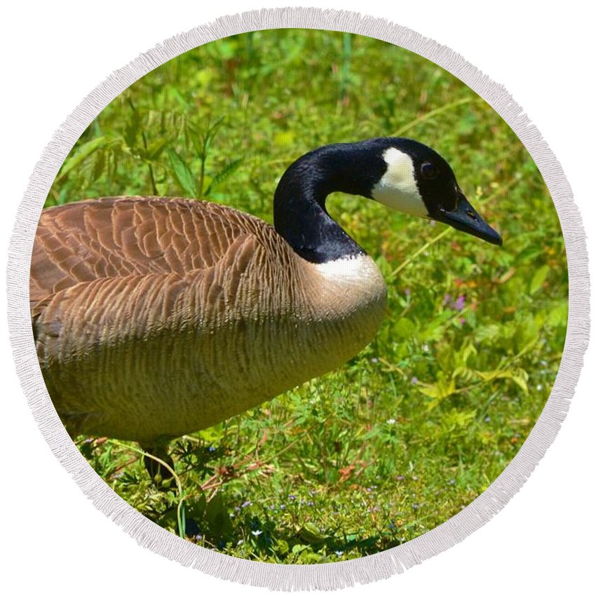 Goose Round Beach Towel featuring the photograph Canadian Goose by Eileen Brymer