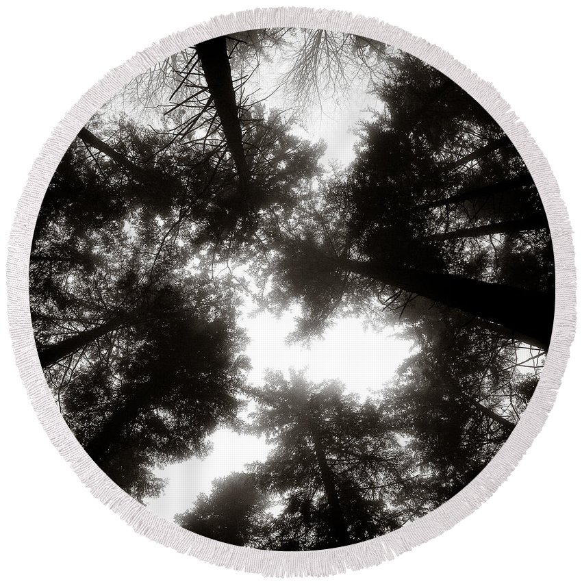 Trees Round Beach Towel featuring the photograph Canopy by Dave Bowman