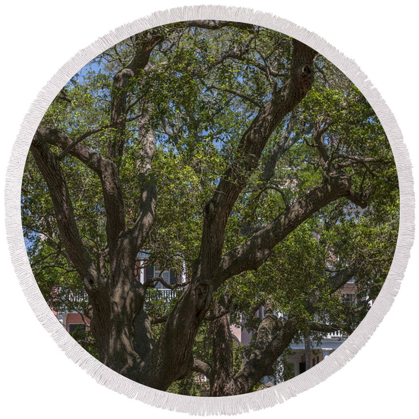 Tree Round Beach Towel featuring the photograph Can't See The House For The Tree's by Dale Powell