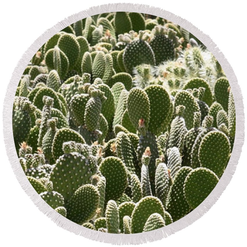 Cactus Round Beach Towel featuring the photograph Canvas Of Cacti by Carol Groenen