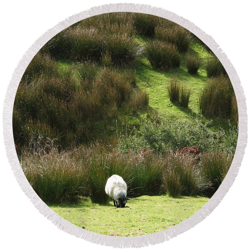Sheep Round Beach Towel featuring the photograph Caora by Kelly Mezzapelle