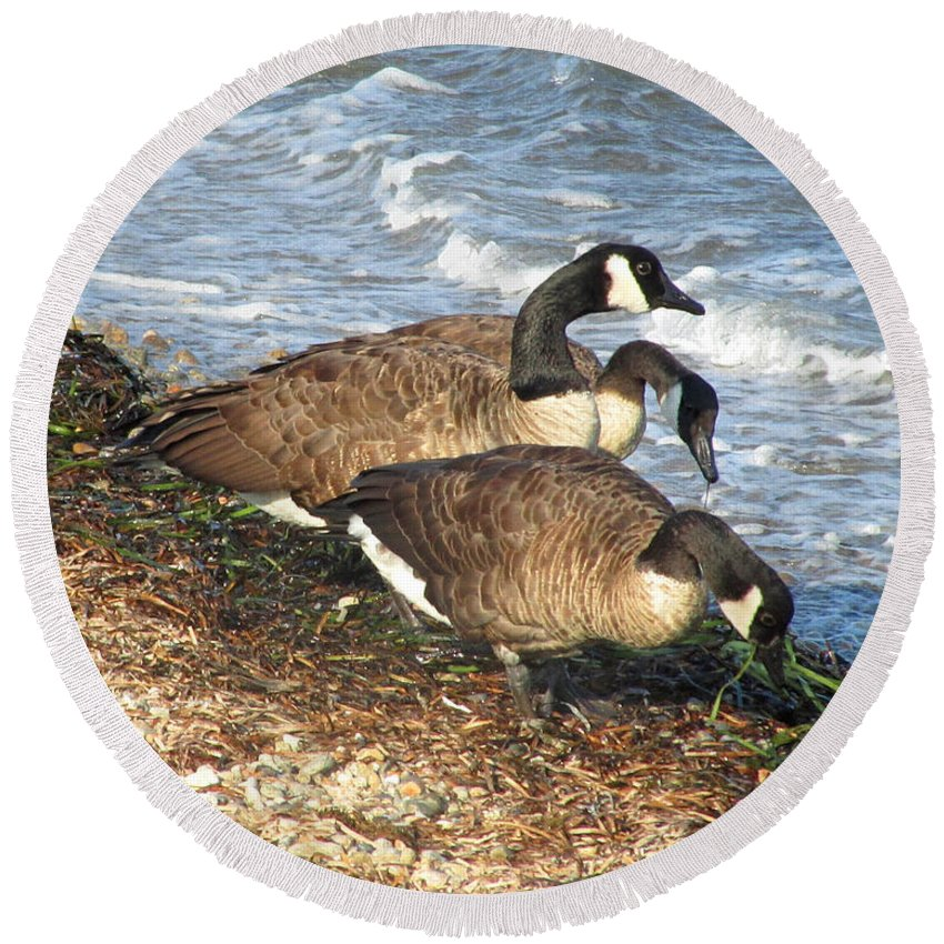 Canada Geese Round Beach Towel featuring the photograph Cape Cod Beachcombers 1 by Mark Sellers