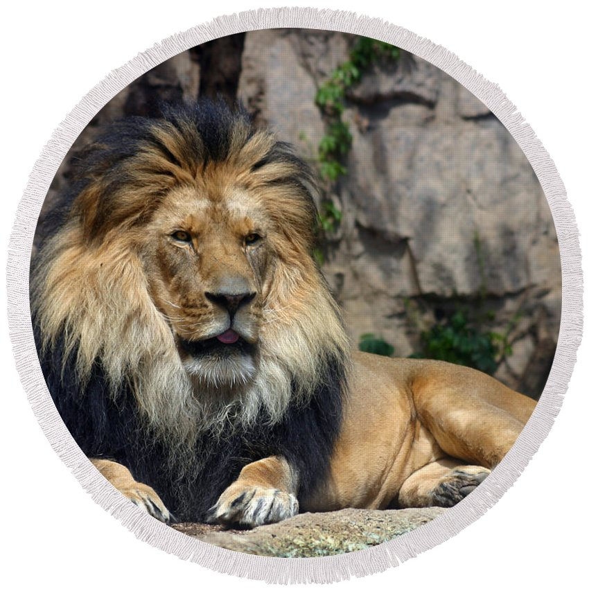 Lion Round Beach Towel featuring the photograph Captive Pride by Anthony Jones