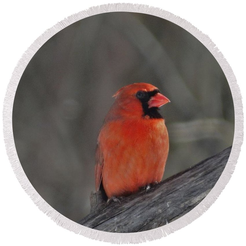 Cardinal Round Beach Towel featuring the photograph Cardinal by Flo McKinley