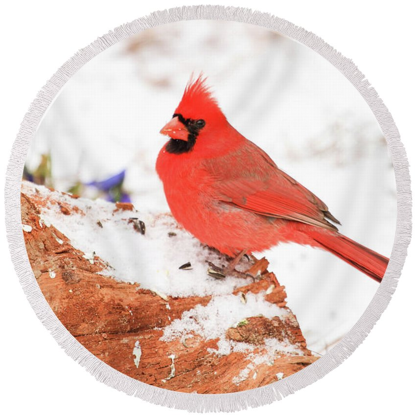 Cardinal Snow Bird Round Beach Towel featuring the photograph Cardinal In Snow by Reecie Steadman
