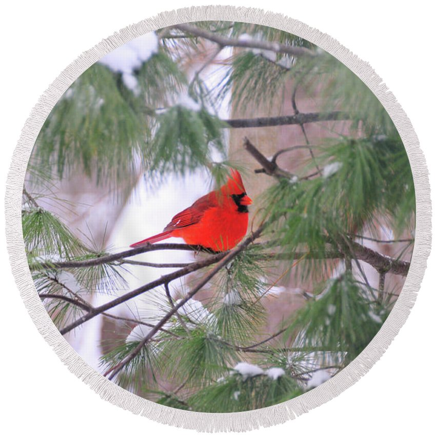 Red Bird Round Beach Towel featuring the photograph Cardinal In Winter by David Arment