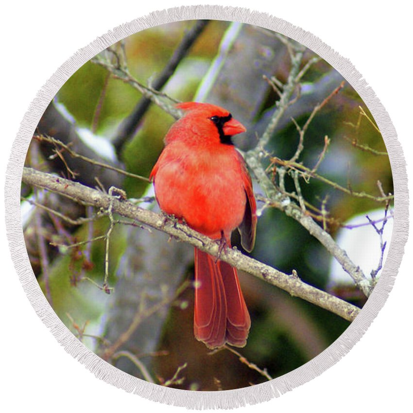 Cardinal Round Beach Towel featuring the photograph Cardinal by Jean Haynes
