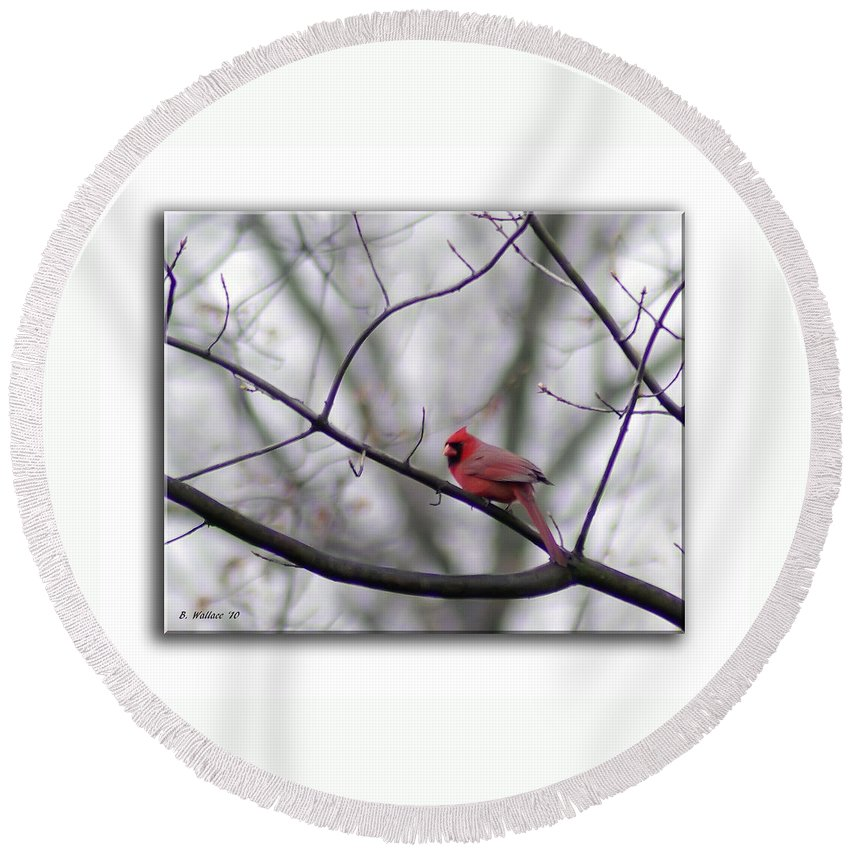 2d Round Beach Towel featuring the photograph Cardinal Perched On A Branch by Brian Wallace