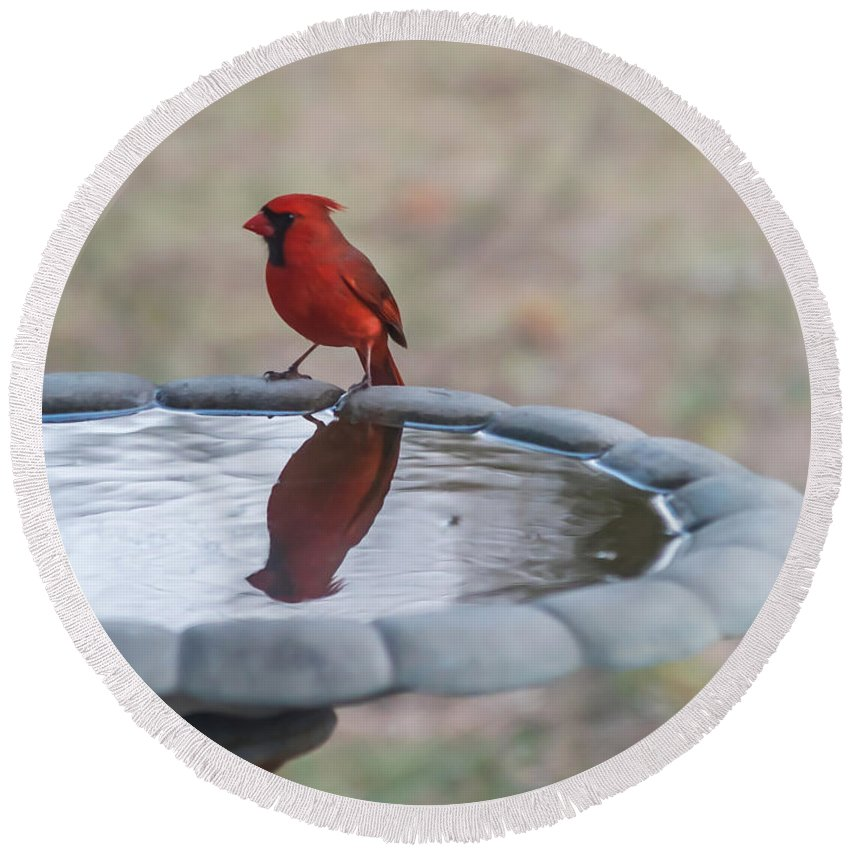 Terry Deluco Round Beach Towel featuring the photograph Cardinal Reflection by Terry DeLuco