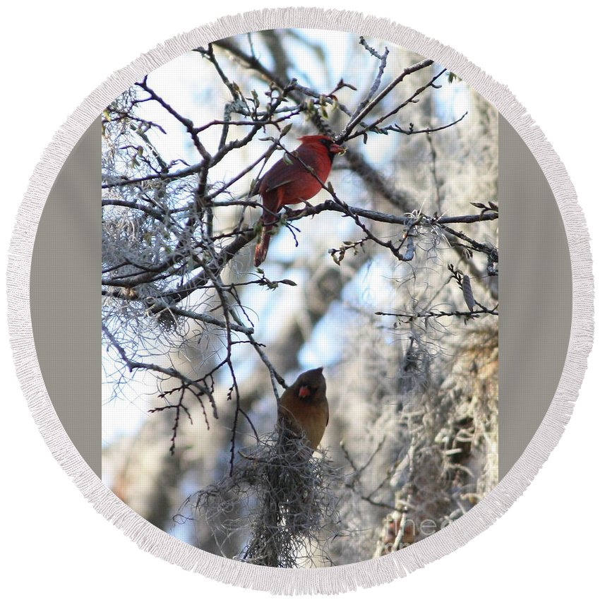Wildlife Round Beach Towel featuring the photograph Cardinals In Mossy Tree by Carol Groenen
