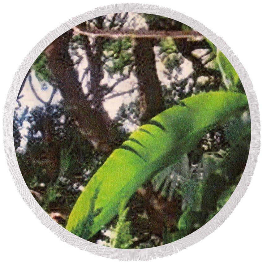 Caribbean Round Beach Towel featuring the photograph Caribbean Banana Leaf by Ian MacDonald