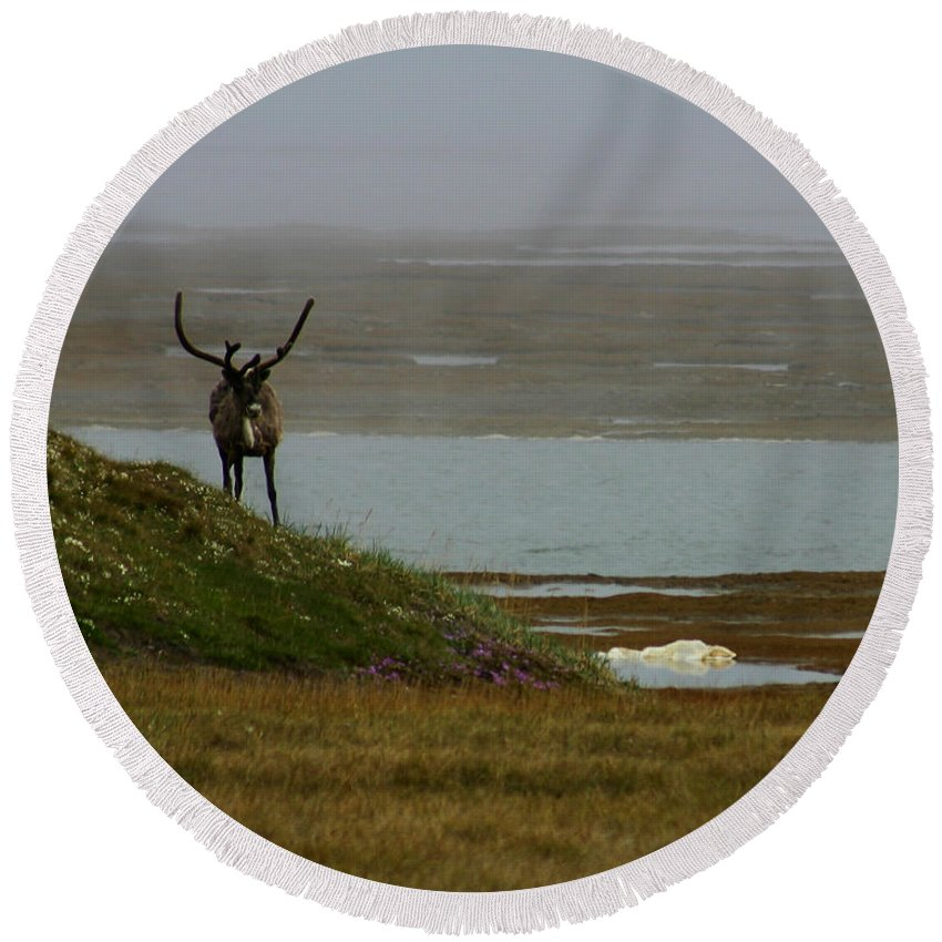 Caribou Round Beach Towel featuring the photograph Caribou Fog by Anthony Jones