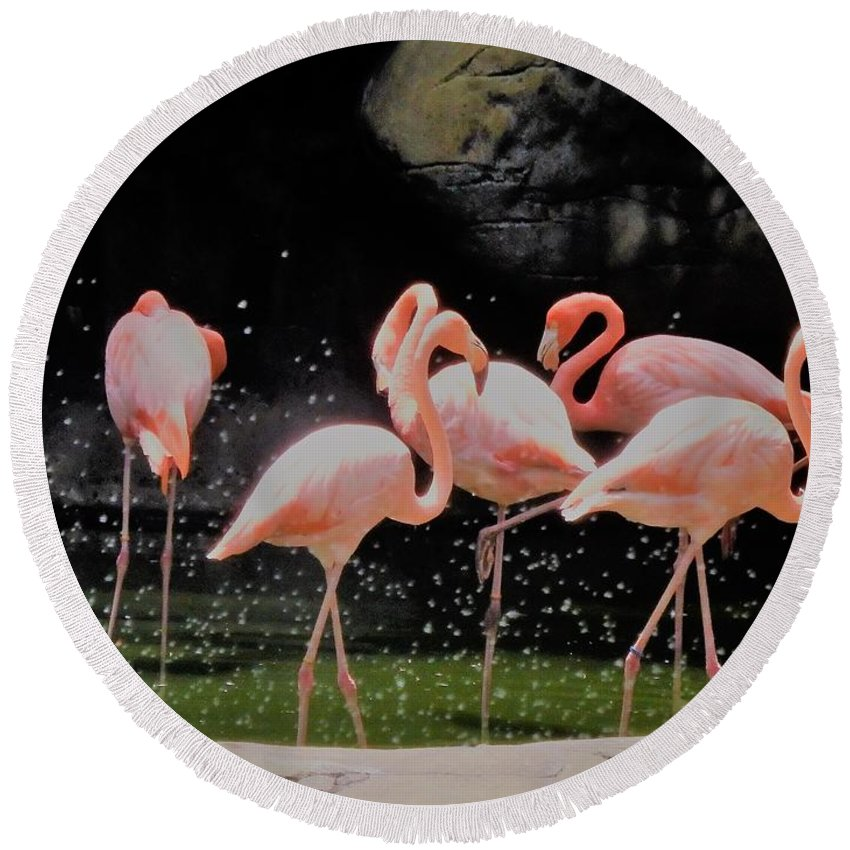 Flamingo Round Beach Towel featuring the photograph Cartagena Pink by Neil Zimmerman