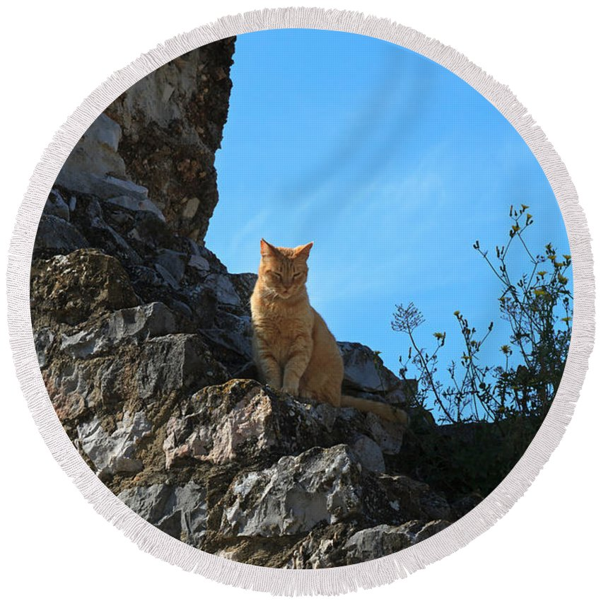 Cat Round Beach Towel featuring the photograph Castle Cat by Louise Heusinkveld