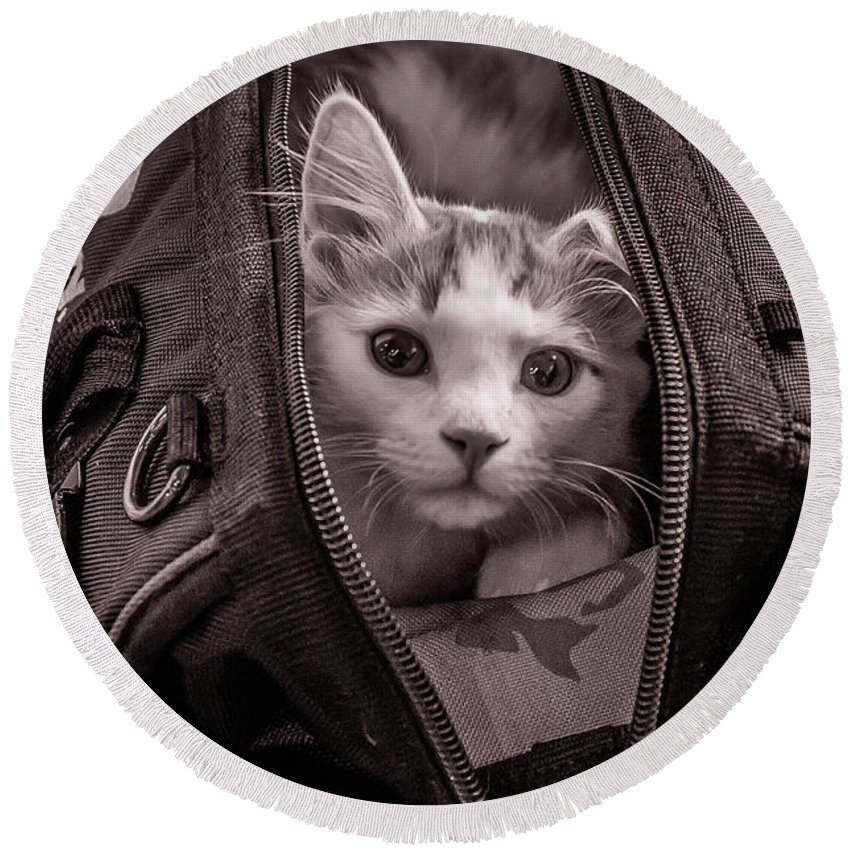 Cat Round Beach Towel featuring the photograph Cat In A Bag by Wayne Heim