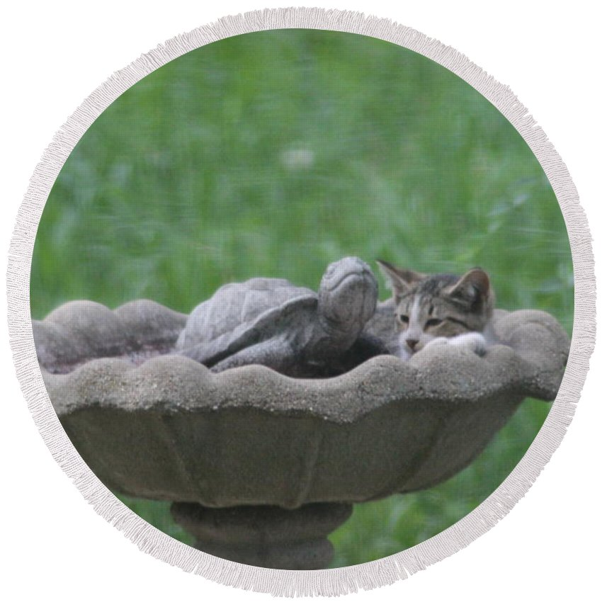 Cat Round Beach Towel featuring the photograph Cat In Birdbath by Cliff Ball