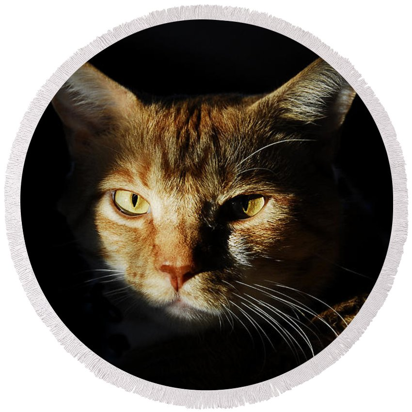 Cat Round Beach Towel featuring the photograph Cat In Shadow by David Lee Thompson